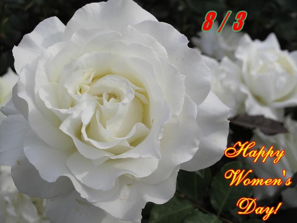 Chúc mừng ngày Quốc tế Phụ nữ 8/3!